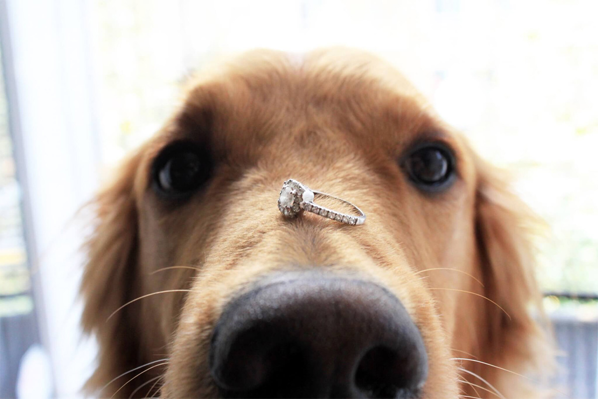 propose with your pet